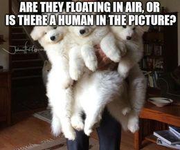Floating in air memes
